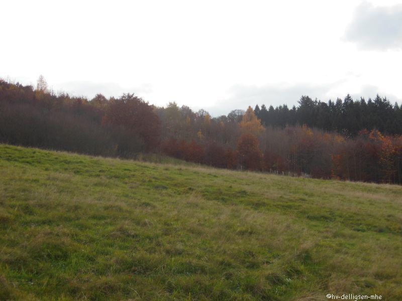 05.11.2015: Baumpflanzung