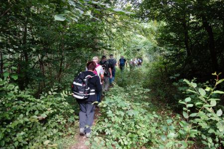 Die Wanderung verlief teilweise auf schmalen Waldpfaden
