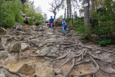 Wir Wanderten Meist Auf Felsigen, Mit Baumwurzeln übersäten Untergrund