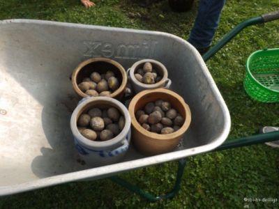 20.09.2014: Kartoffelbratschen